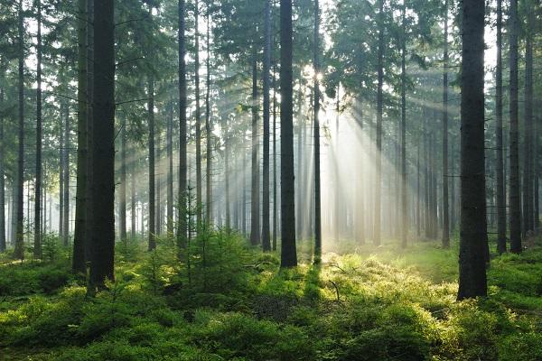 Лес в Британской Колумбии