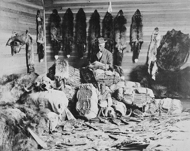 fur-trader