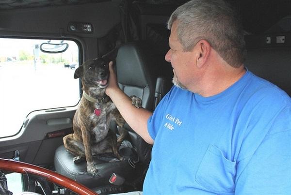 Канадский дальнобойщик с собакой